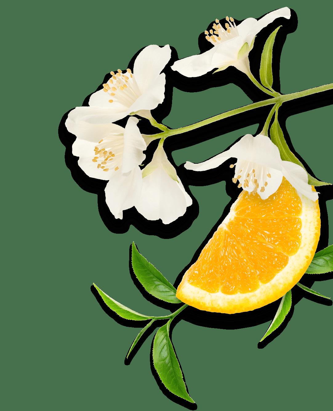 زهور البرتقال