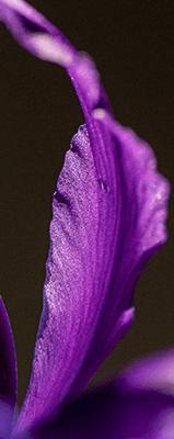 عطور الزهور